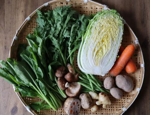 宅配野菜セットの魅力再認識。ビオ・マルシェの宅配「多菜セット」