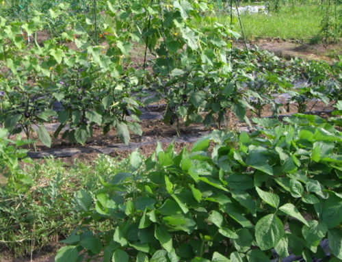 栽培技術講習会「有機栽培における土づくりと最近の栽培現場での傾向2020年2月27日(木)開催